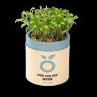 Micro Cilantro (Ghoa Cress)