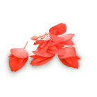 Incan Begonias
