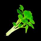 Micro Wasabi