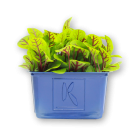 RED VEINED SORREL CRESS