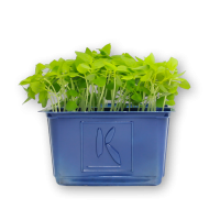 Basil Limon Cress