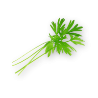 Micro Carrot