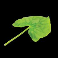 Syrha Leaves